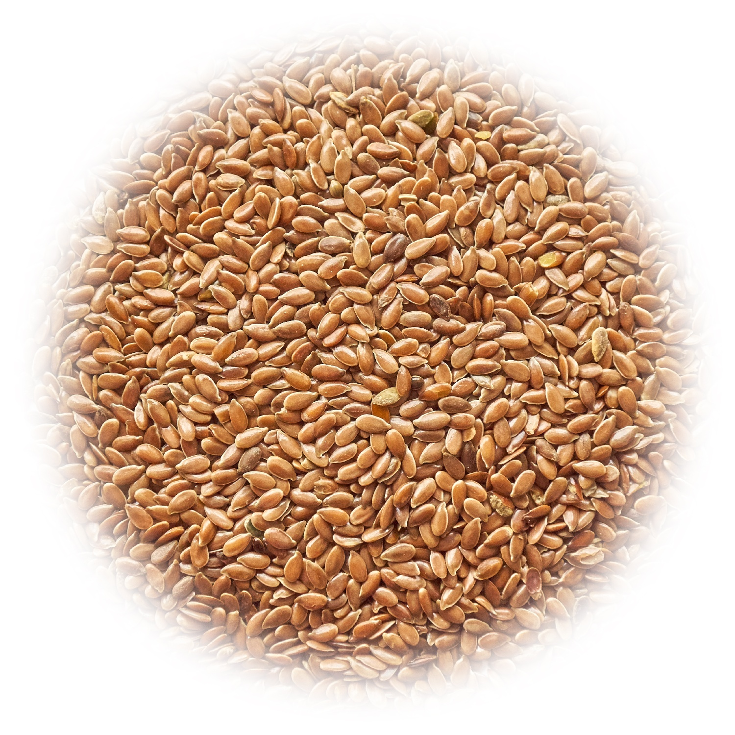 Brown flax (linseed)